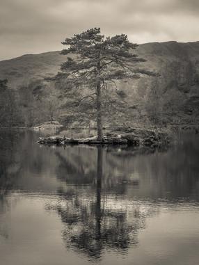 Tree Portrait, Tarn Hows
