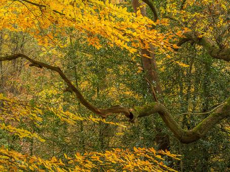 More Cheshire Autumn