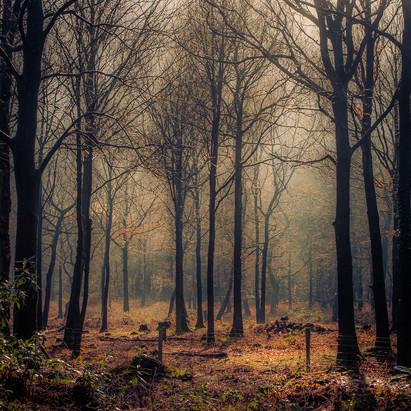 Wizard Woods Alderley Edge