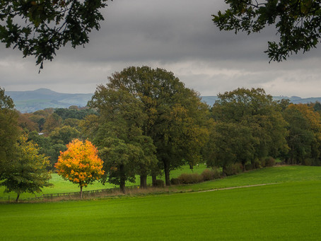 Autumn Tree Portraits – Alderley Edge