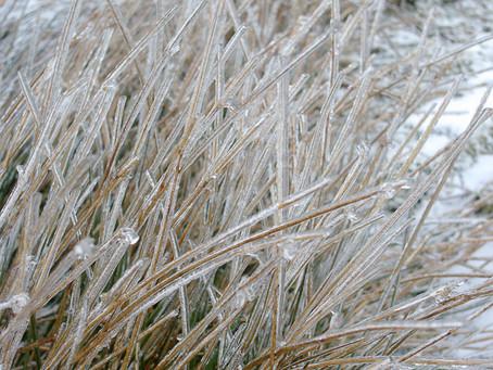 An Icy Shroud