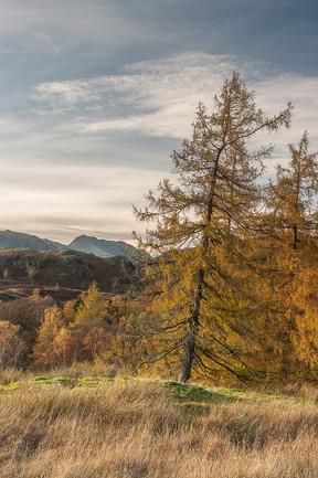 Autumn view to Bowfell 3