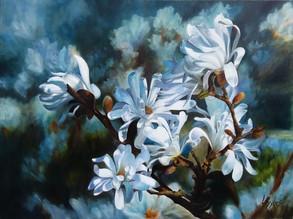 """Lynn C. Sykes""""Star Magnolia"""""""