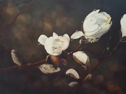 Lynn C Sykes - Spring Rain Magnolia