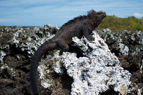 Galapagos 20.jpg