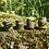 Thumbnail: Dreadbead woodlands