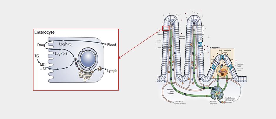 Apatinib : 암세포 신생혈관 생성 억제 표적항암제