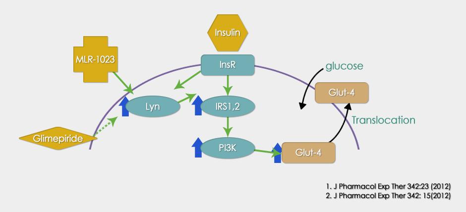 MLR-1023 : 인슐린 수용체 활성화제