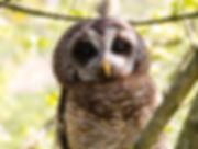Owls by Debbie Arriaga 12.jpg