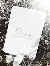 Pack animals flare.jpg