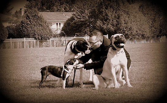 Me playing with a great dane, Boston terrier and a bullmastiff