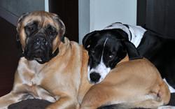 Spot and Sadie