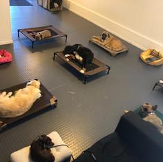 Dog Training Room