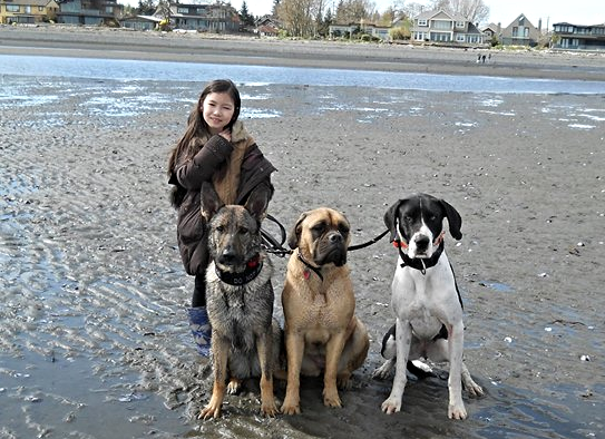 Little Girl with three big dogs