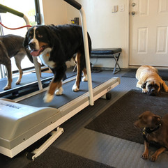 Dog's fitness room