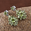 Thumbnail: AA Hebei Peridot (Rnd) Earrings (with Push Back) in Platinum Overlay Sterling Si