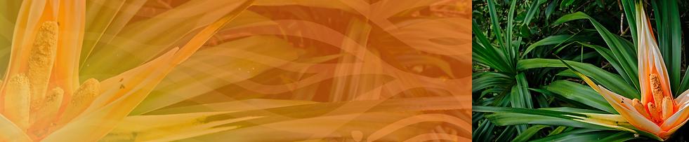 L&T Task Force Website Banner.png