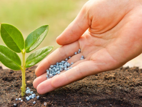 Dos and Don'ts of Fertilising