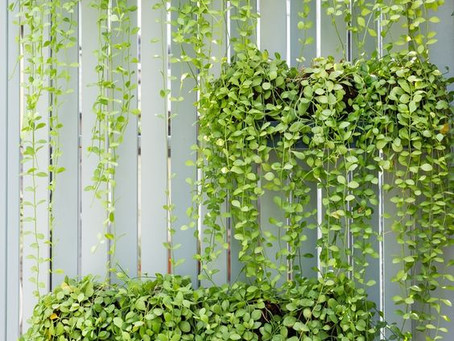 10 Reasons Why You Need a Vertical Garden