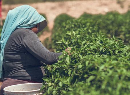 Publica Estado acuerdo de medidas de prevención para el sector agrícola por COVID-19