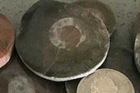 Polished Mini Ammonite