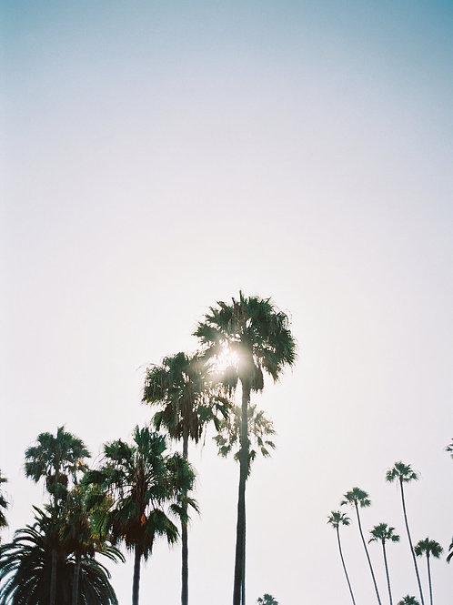 Sun Break Palms
