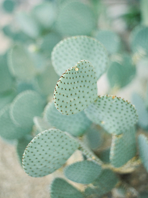 Detailed Cacti