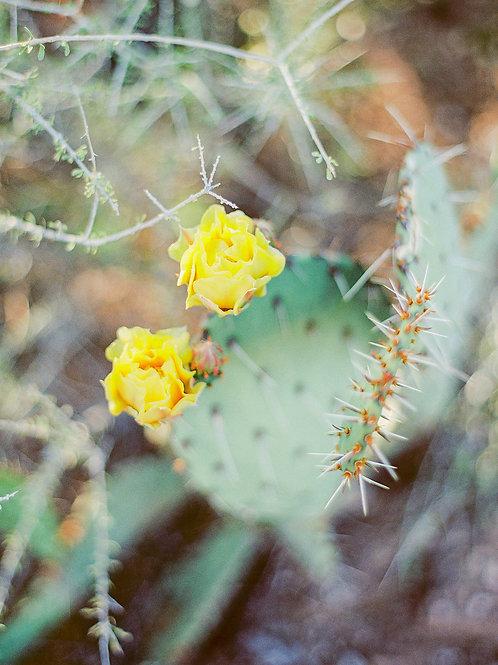 Marigold Cacti Bloom