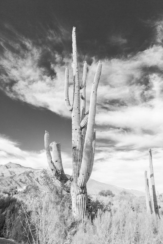 Tucson Wedding Photographer | Westin La Paloma
