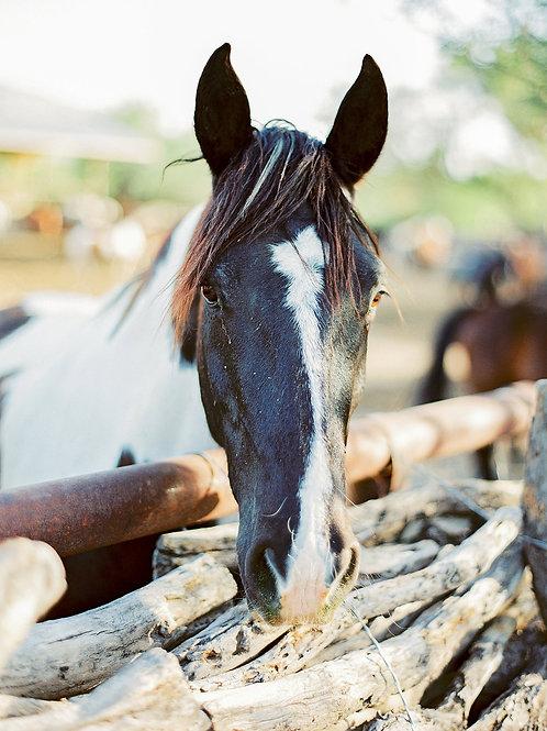 Equestrian Moment