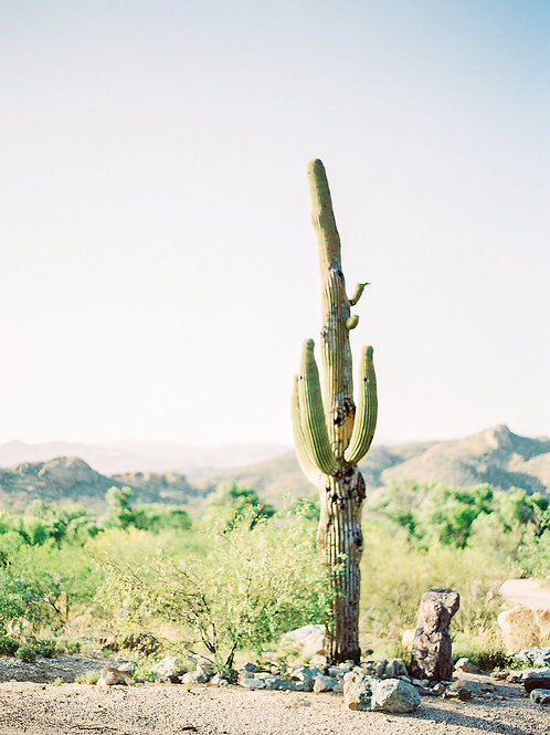 Timeless Cactus