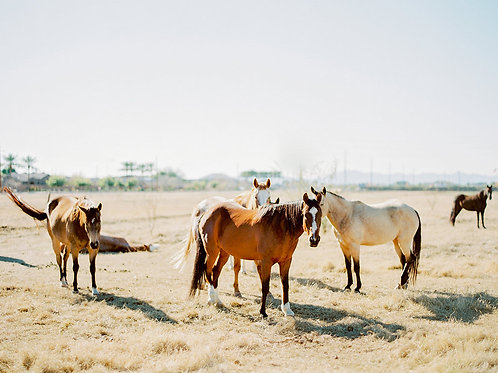 Arizona Horses in the Wild