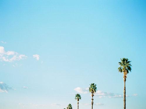 Horizon of Palms