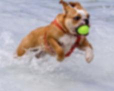 Doggy Daycare - Indoor Splash Pool