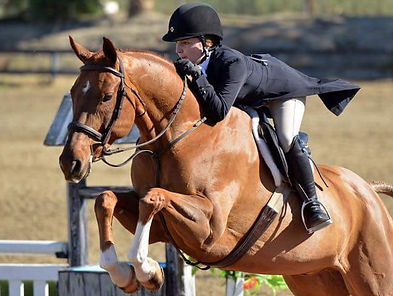 Pacific Star Equestrian - jump horses for sale