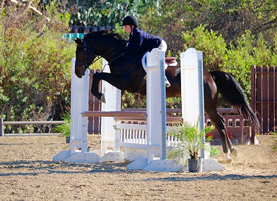 Pacific Star Equestrian jumpers for sale