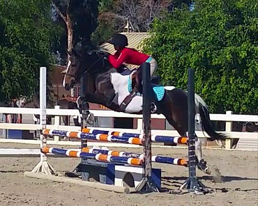 Pacific Star Equestrian horse sales
