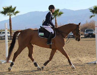 Pacific Star Equestrian horses for sale