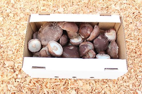 1kg Värsked Shiitake seened