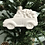 Thumbnail: Truck with tree ornament -River Park Square