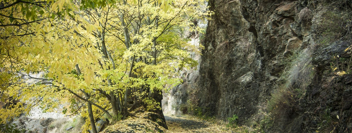 otoño vía verde.jpg