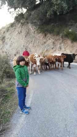 ¡Vaca!
