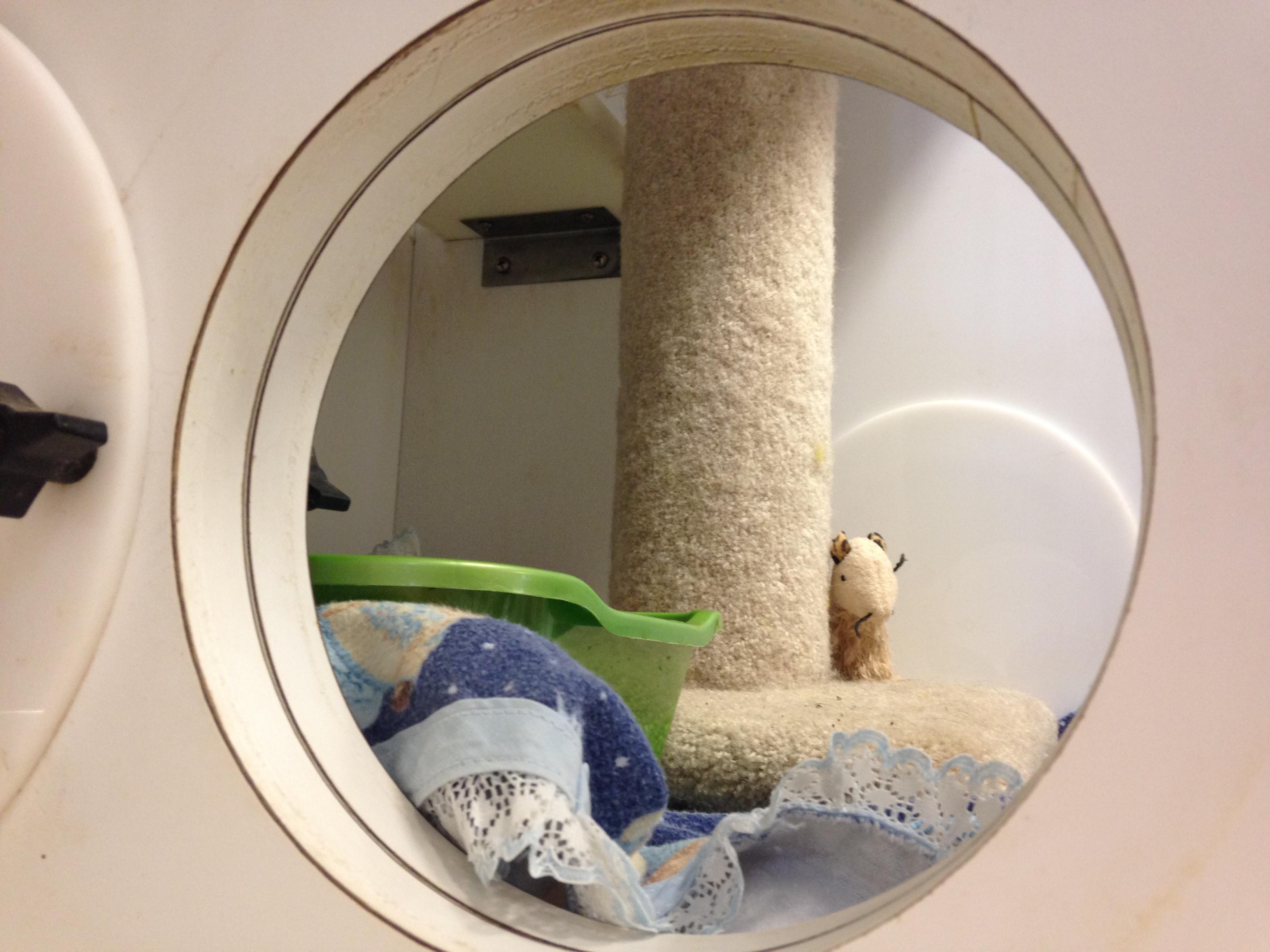 Cat Boarding Play Area Hole