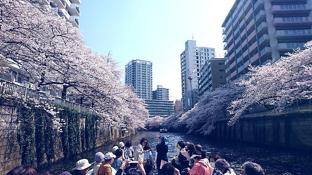 目黒川,桜,お花見,クルーズ