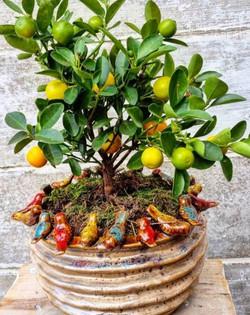 Vogelvaas met citroenboompje