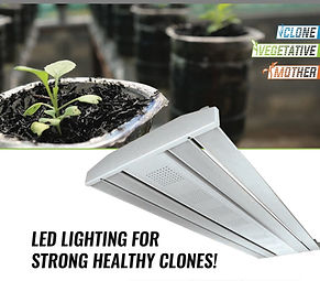 Grow Light_edited.jpg