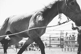 Mustang_10.jpg