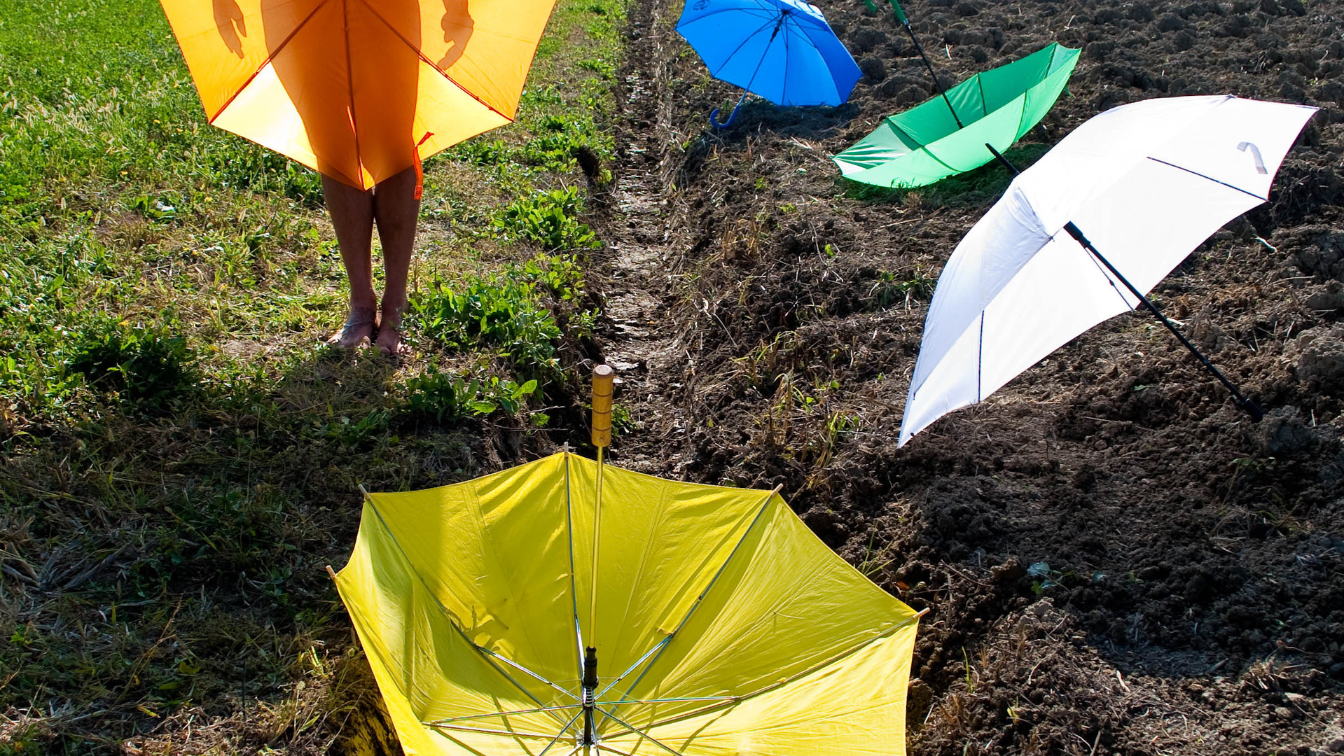 All umbrella.jpg