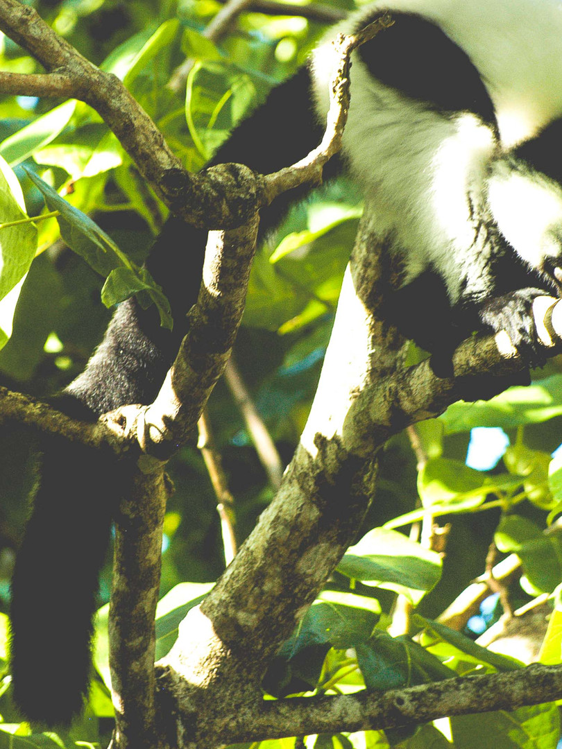 Madagascar580.jpg