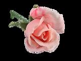 Fermentation_of_stuff_rose copy.png